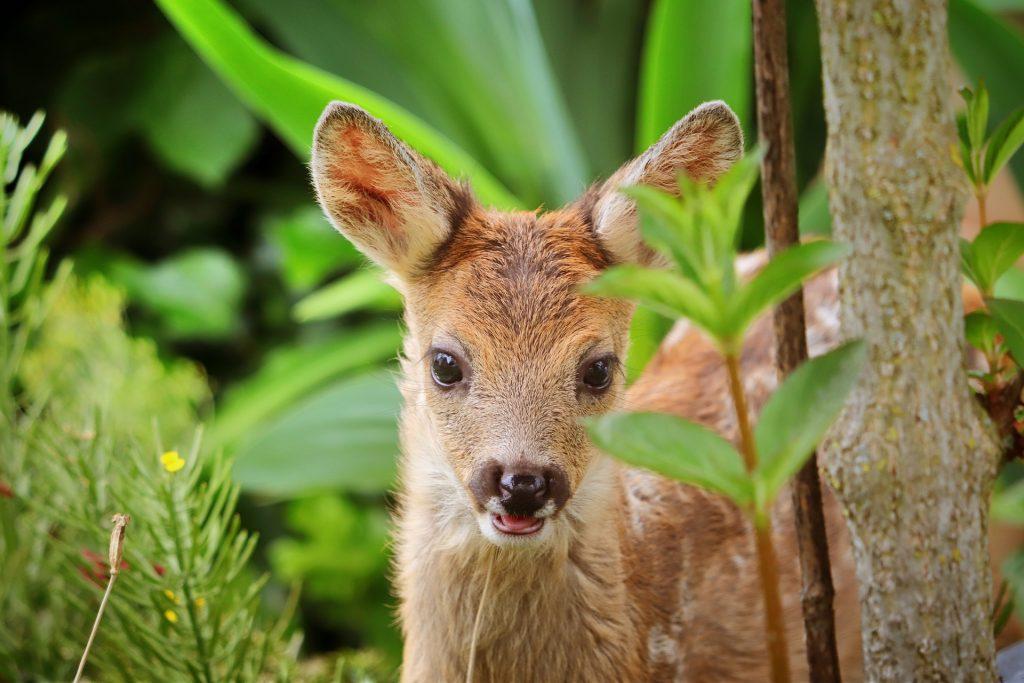 Tierrettung am Erdbeerfeld