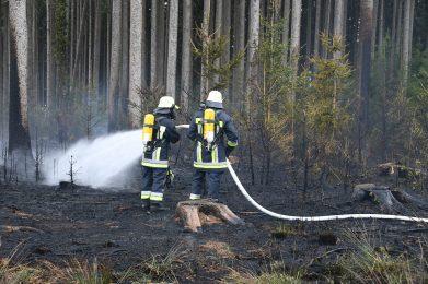 April 2020: Waldbrand Baierbach 3